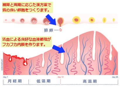 子宮筋腫、不妊症、がんの治療相談「駒込漢方専門スコヤカ薬局」補腎と活血